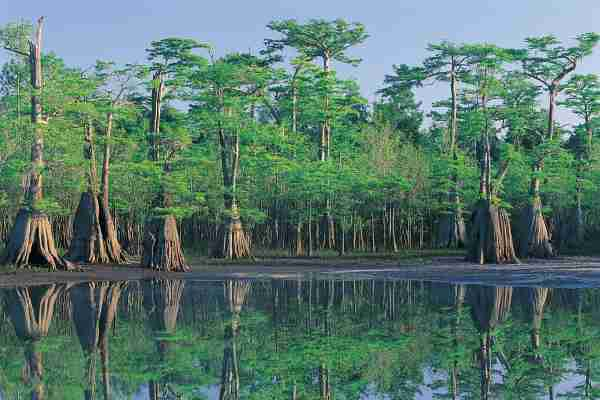 Apalachicola National Forest. (Photo by Natphotos/Getty Images)