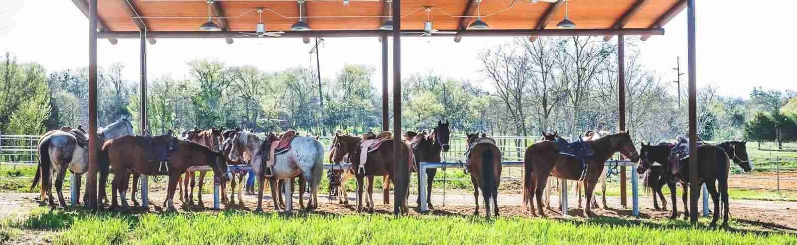 (Photo via River Ranch Texas Horse Park on Facebook)