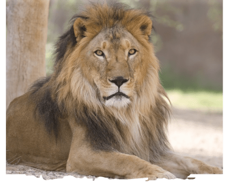 al ain zoo offer experiences animal feeding uae