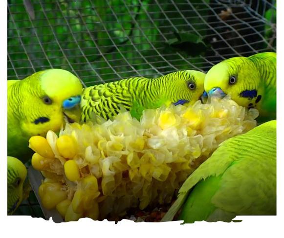 al ain zoo offer experiences budgiefeeding uae