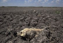World is headed for an environmental disaster
