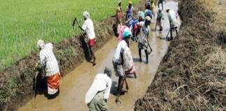 34 states not giving minimum wages fixed in MGNREGA
