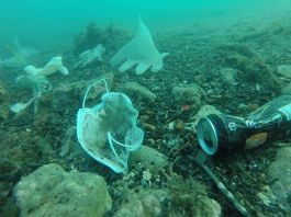 More Masks than Jelly Fish- Environmentalists worrying over Covid-19 waste in Oceans_The_Policy_Times