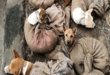 Nagaland bans trade of dog meat after viral image of 'dogs slaughtering' surface . the policy times
