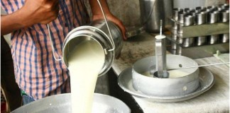"""""""Milk""""- a New Tool in the Farmers' Protest; Increment in the Price up to Rs 100 per Litre in Haryana THE POLICY TIMES"""