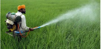 Bring Policy to Ban Overuse of Pesticides in Agriculture the policy times