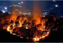 Forest Fires in North India: Natural or a Man-Made Disaster? THE POLICY TIMES