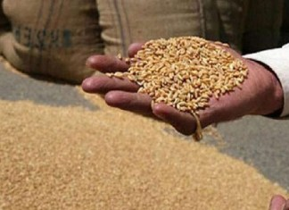 Centre increases MSP for wheat by ₹40 per quintal