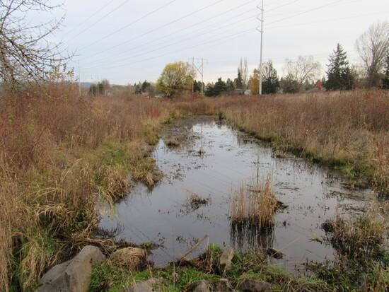 stoller creek