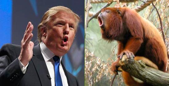 Donald-Trump--Howler-Monkey.jpg
