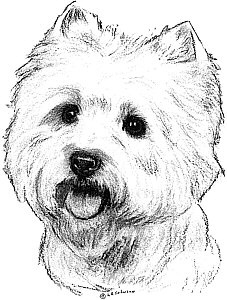 Canine Portraits By The Pooka