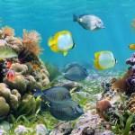 Anguilla guarda muchos secretos submarinos