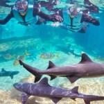 Nade con Tiburones en Discovery Cove