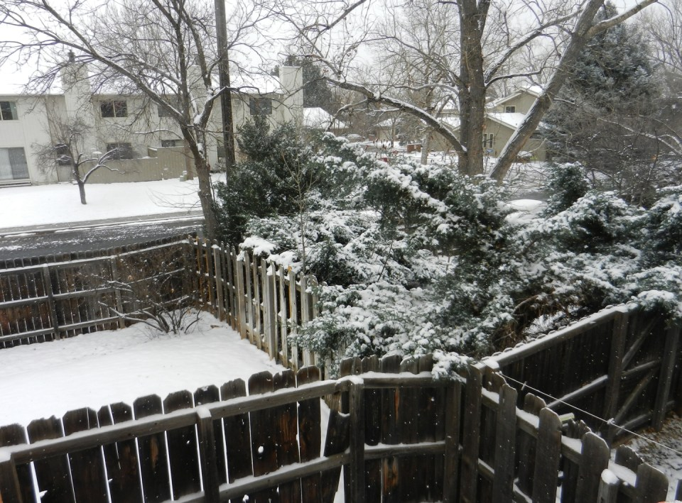 Snow in Boulder, CO | The Postman's Knock