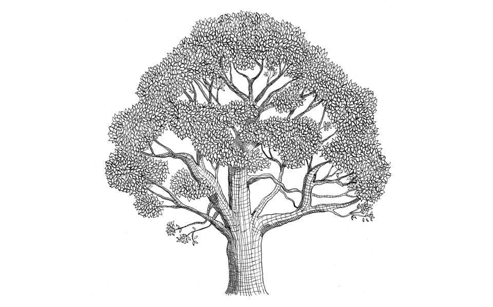 Line Drawing of a Tree | The Postman's Knock