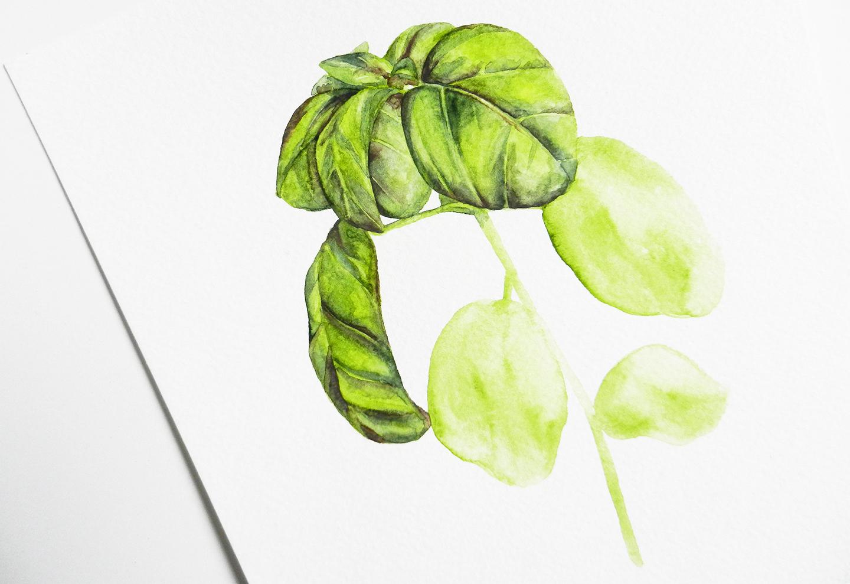 Herbal Watercolor Tutorial + a Free Printable | The Postman's Knock