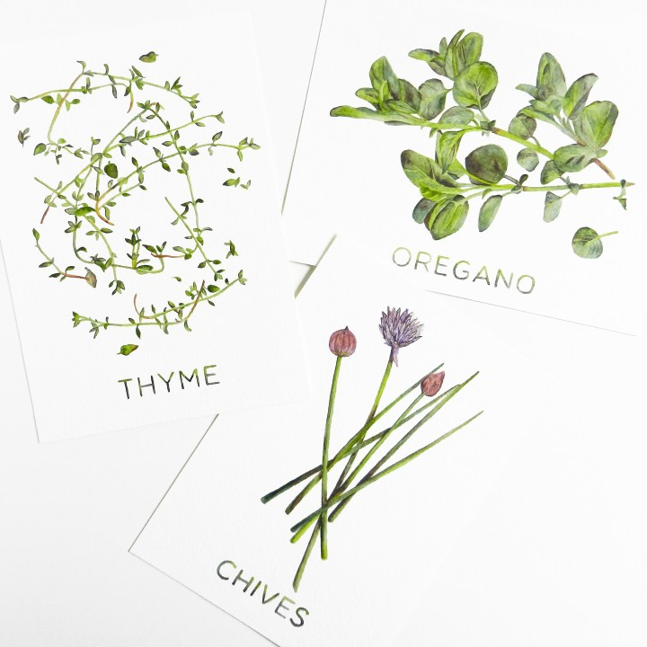 Printable Watercolor Artwork Set: Chives, Oregano, and Thyme | The Postman's Knock