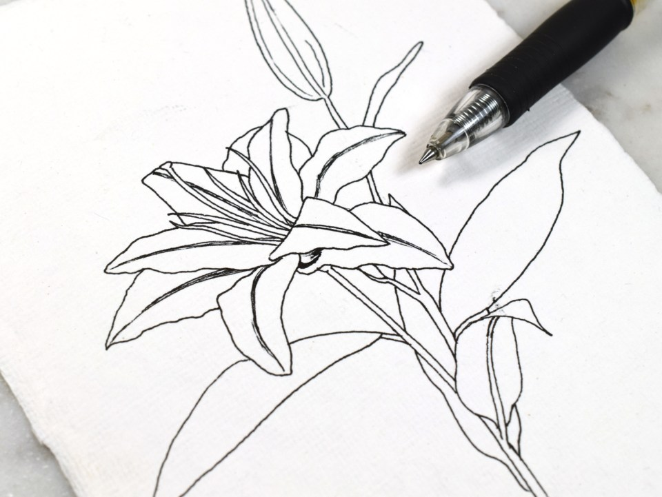 Making a Lily Drawing