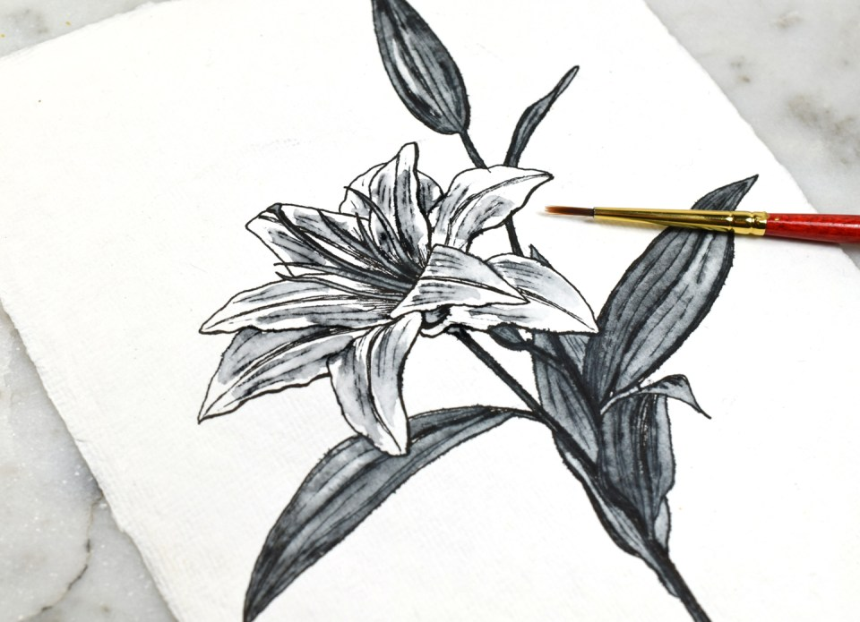 Adding Water to the Lily Drawing