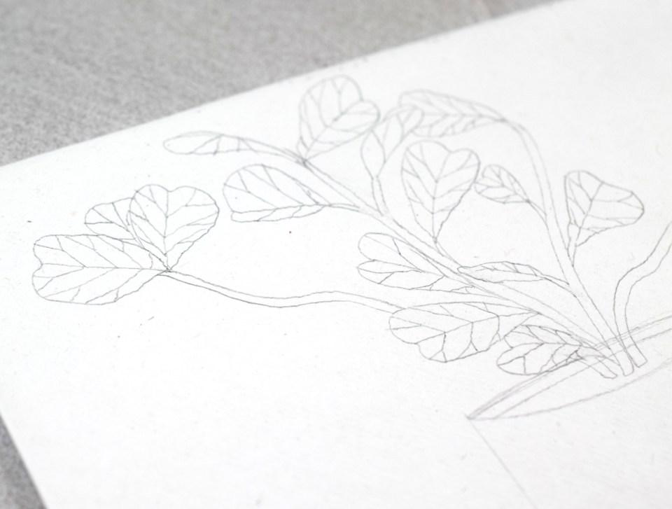 Making a Fiddle Leaf Fig Illustration Draft