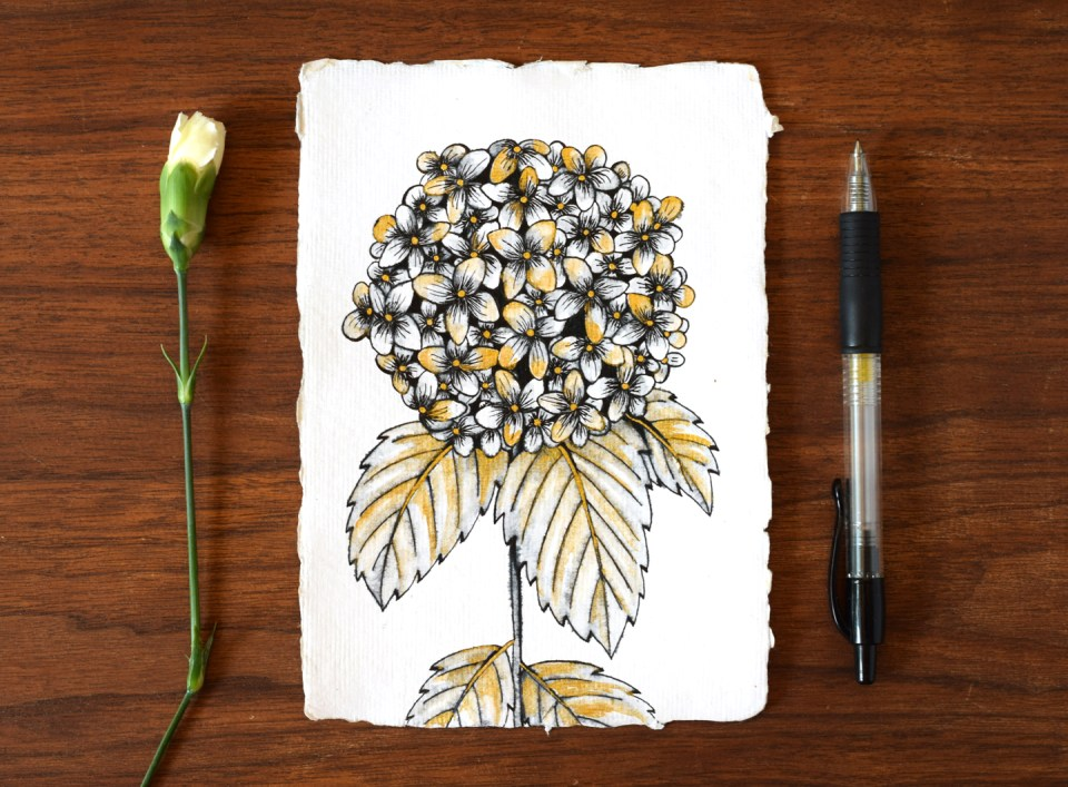"""Gorgeous """"Water Stained"""" Hydrangea Illustration Tutorial"""