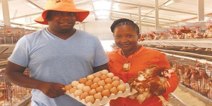 Namibia's King And Queen Of Poultry