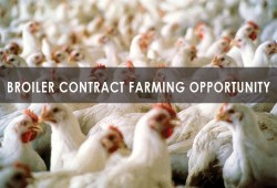 Broiler Contract Farming Opportunity
