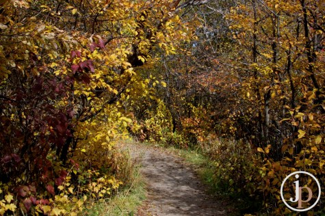 Colored Trail