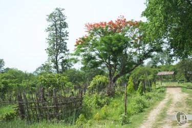 Chitwan (6)