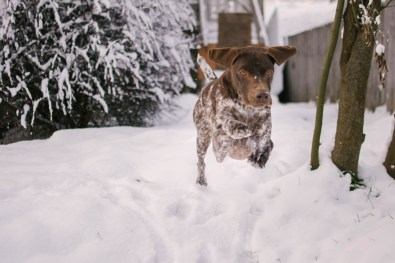 Oregon Dog Photography