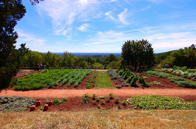 big veggie garden