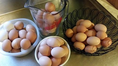 lots o eggs