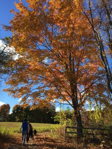 Fall Leaves fill the Blue Sky