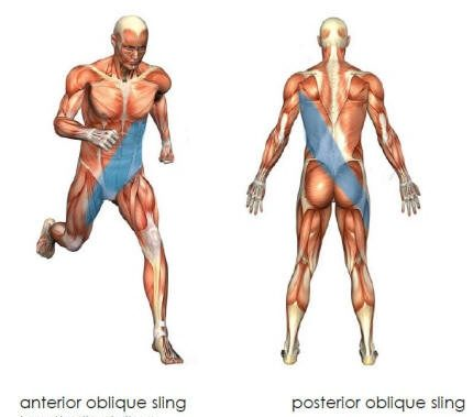 Oblique sling exercise progressions anatomy