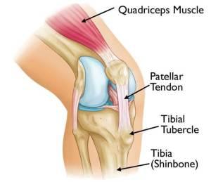 best exercises osgood schlatter disease the prehab guys
