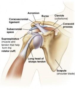 biceps tendon pain exercises shoulder anatomy the prehab guys