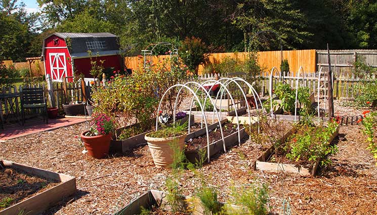 Hopefully, you are already in full swing on your own garden, but if you have been putting it off, or are still conducting research on how to start your own garden, this article is for you. If you're a beginner vegetable gardener, here are basics on vegetable garden planning: site selection, plot size, which vegetables to grow, and other gardening tips.