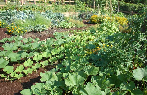 During the difficult days of World War II, victory gardens became popular symbols of frugal living and self-reliance. As the nation's resources became focused on the war effort, families did their part to economize by growing their own vegetables, herbs, and fruit. The victory garden has enjoyed a new lease on life in our own day. In tough economic times, it is more appealing than ever to grow your own food. It can also be an important part of a modern healthy lifestyle. Even if you're on a tight budget, these seven tips can help you get started with a successful victory garden. You'll be on your way to delicious home-grown food before you know it!