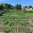 Preppers can reap some big rewards by applying some of the habits of successful market gardeners and small farmers to our home gardens.