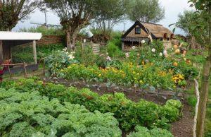 homesteading guide