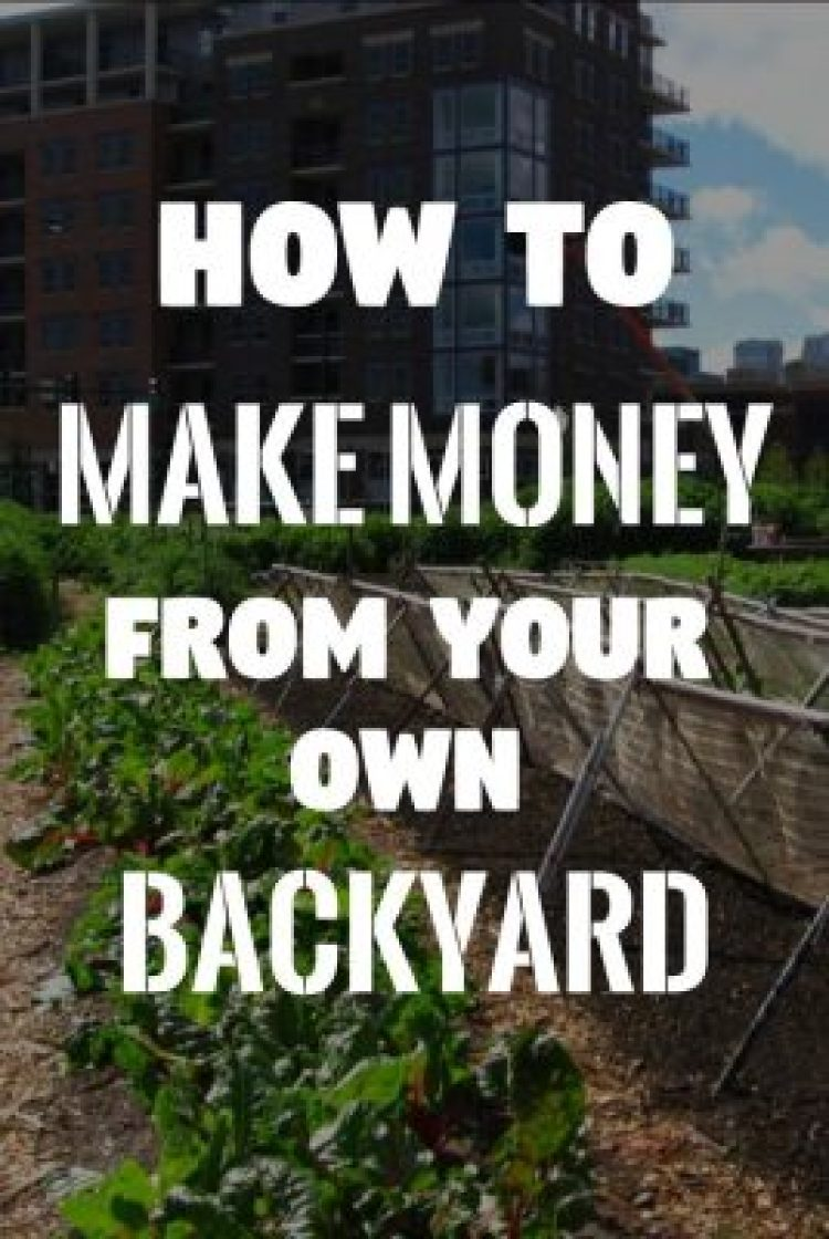 City Farming: If Your Yard Looks Like This You Could Make USD$950/wk