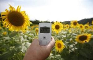 sunflowers radiation