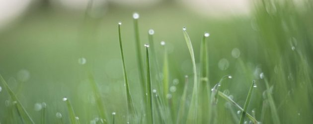 how to find water from grass