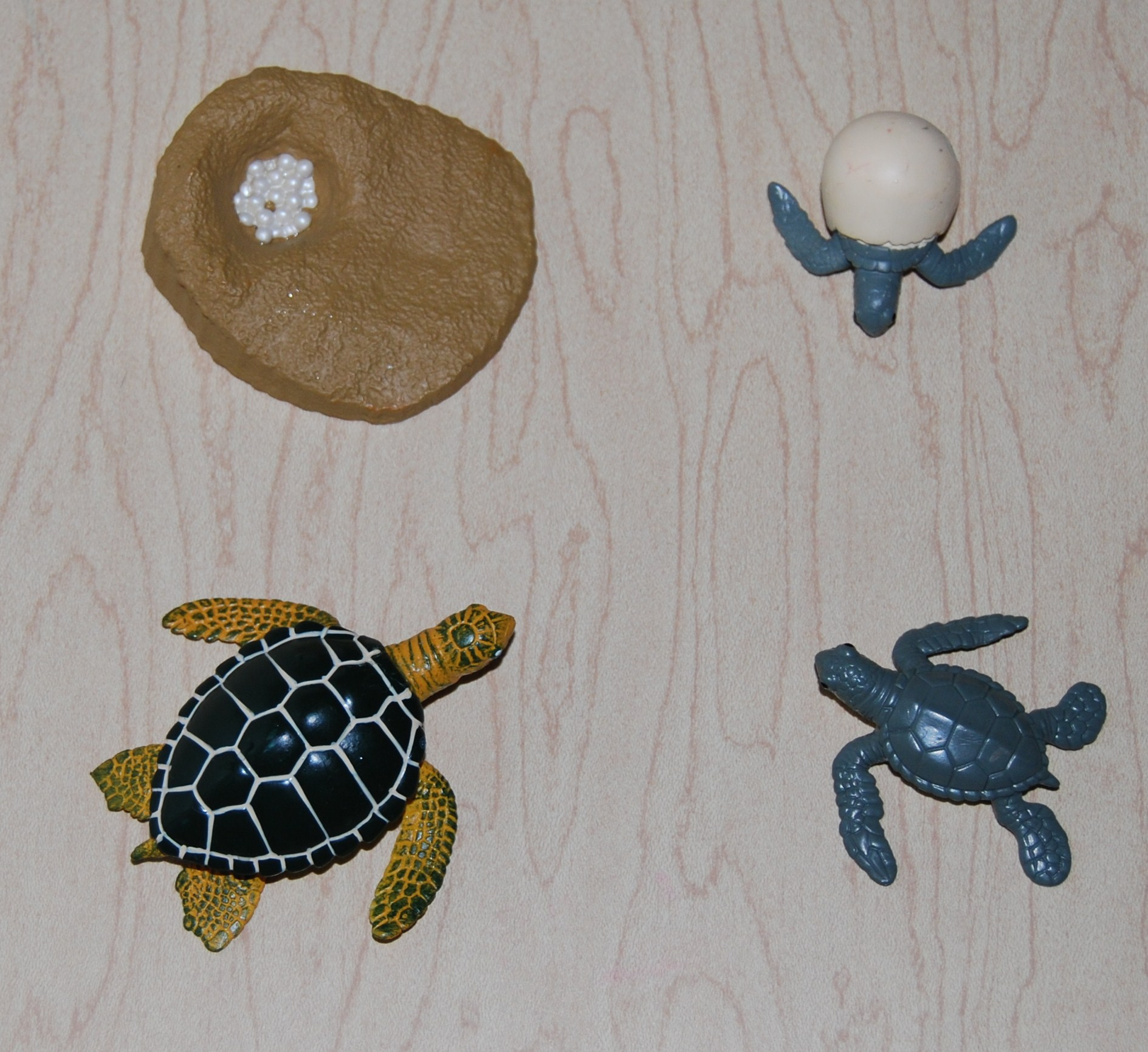 Sea Turtle Post 018 The Preschool Toolbox Blog