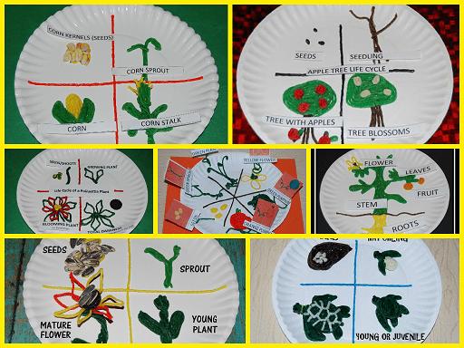 Corn Life Cycle Sequencing Cards For Preschool Playfulpreschool The Preschool Toolbox Blog