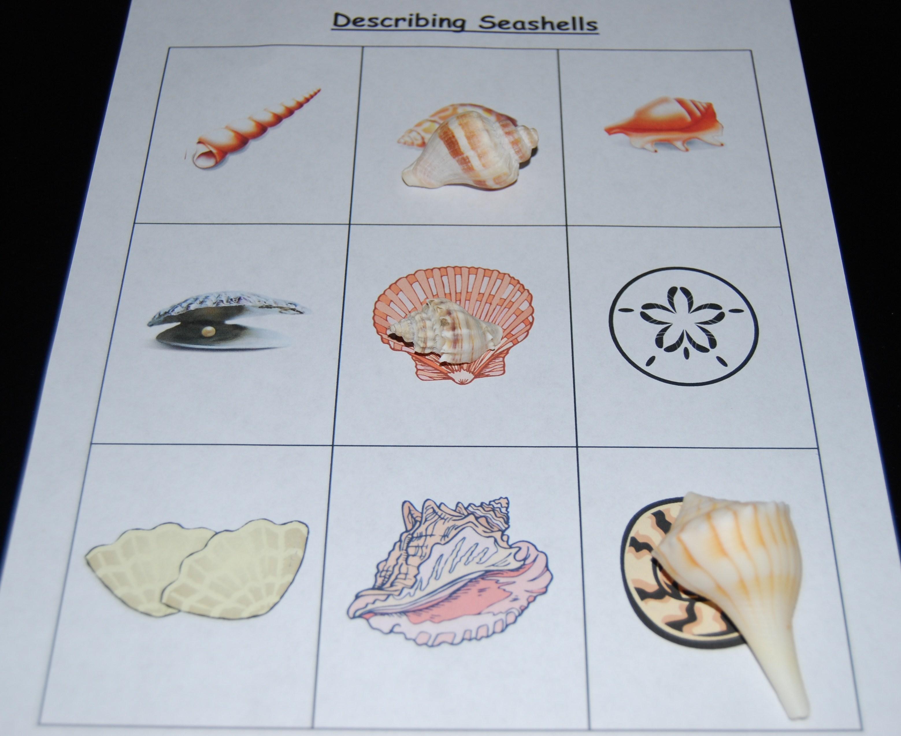 Describing Seashells The Preschool Toolbox Blog