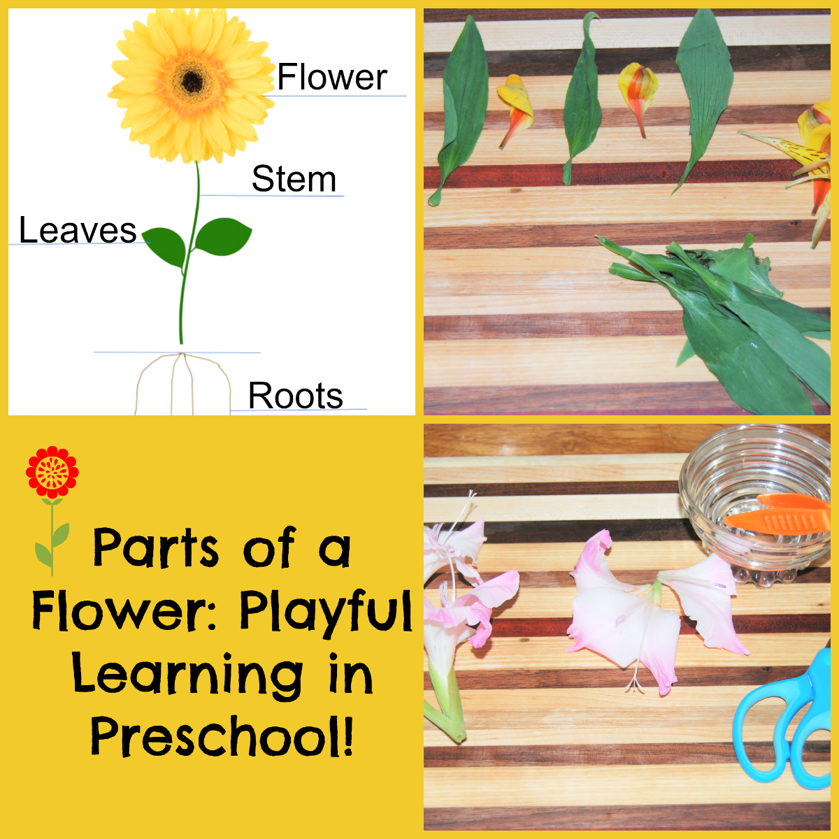Parts Of A Flower Playful Learning Flower Centers For Preschoolers The Preschool Toolbox Blog