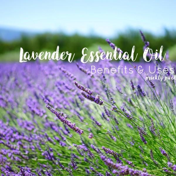 doTERRA Lavender Essential Oil – Benefits, Uses, & Videos