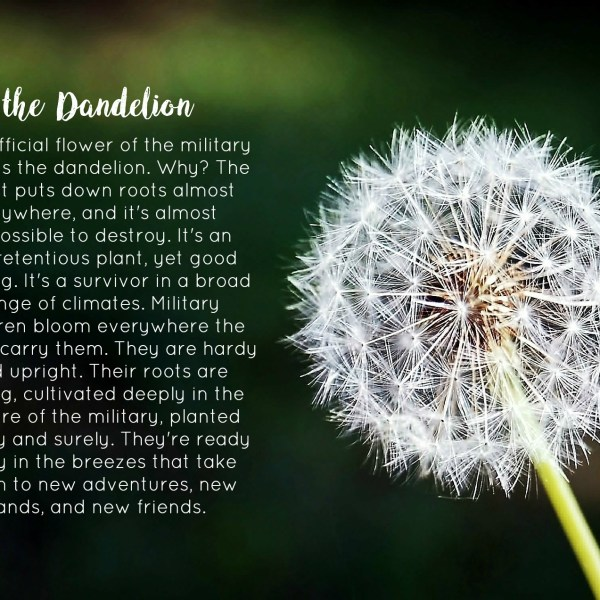 The Dandelion – The Official Flower of the Military Child