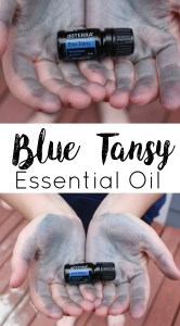 doterra blue tansy essential oil uses benefits